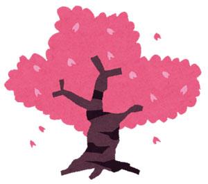今年の桜は?開花・満開予想|お花見におすすめのグッズを紹介
