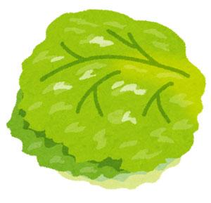 水耕栽培器とは?新鮮野菜が家庭のキッチンで収穫できるの?!