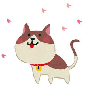 ネコヤナギはなんで猫柳って名前なのか?由来や花言葉は?