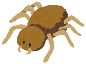 日本に殺人蜘蛛?!セアカゴケグモに要注意!
