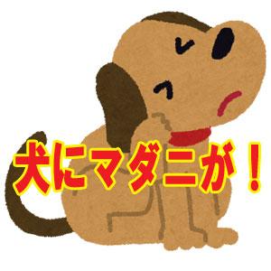 犬についたマダニは危険なの?予防するにはどうすれば?