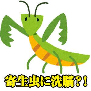 ハリガネムシが人間に寄生!?カマキリを洗脳する恐怖の寄生虫